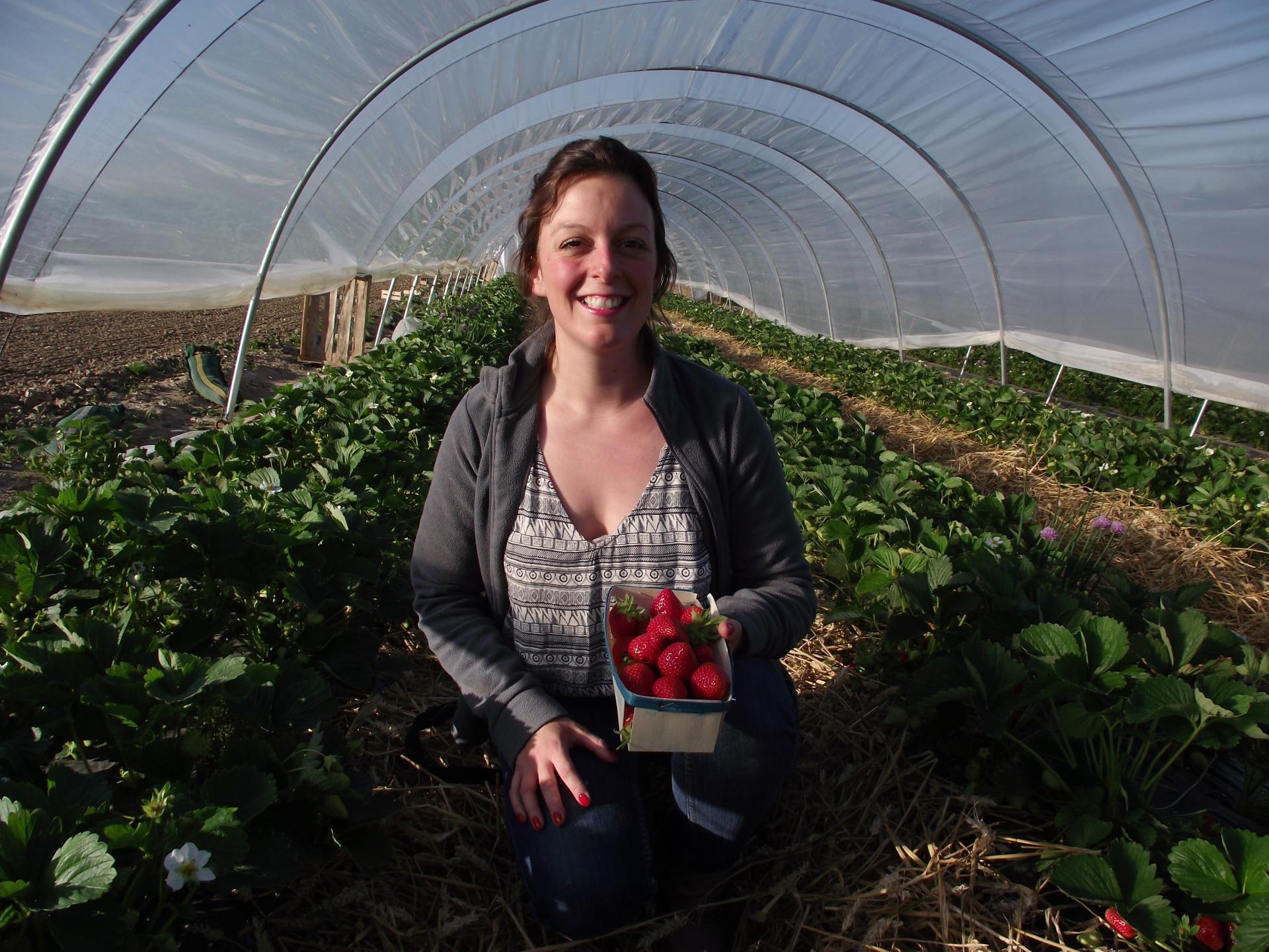 fraises Aurore